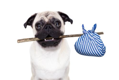 Hund trägt einen stock mit beutel